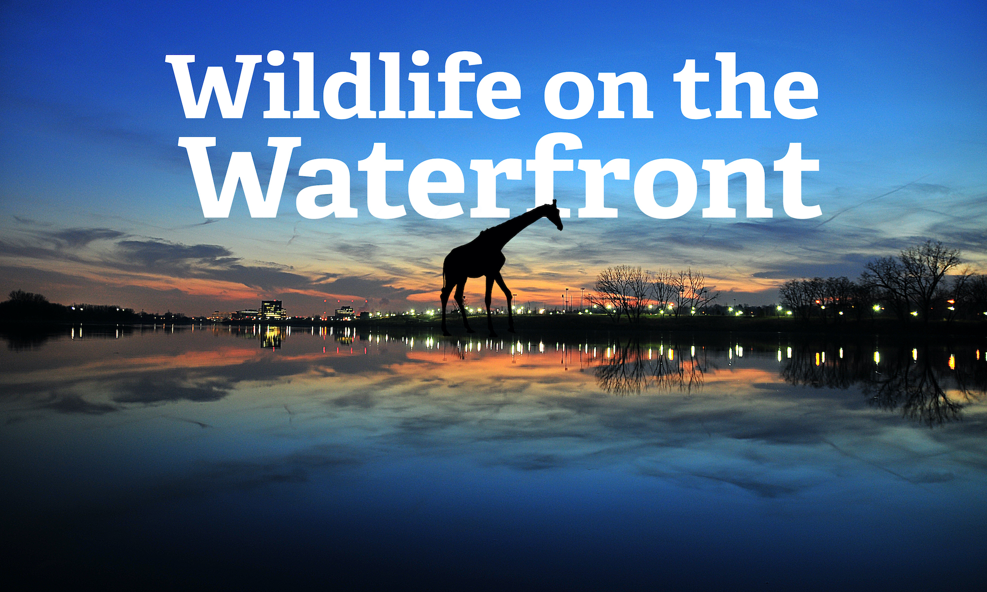 Wildlife on the Waterfront
